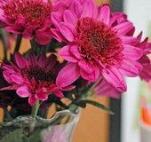 Flower-Week_CC_post_1
