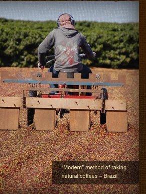 Modern method of raking natural coffees -- Brazil