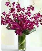 Orchid Embrace™