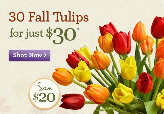30 Fall Tulips, just $30* Save $20!  Shop Now