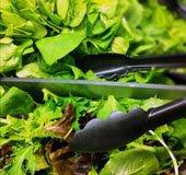 SaladChoice_NLsm