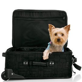 Hit the Road: Pet Travel Gear
