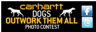 Carhartt Dogs Outwork Them All Photo Contest