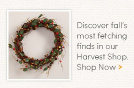 Discover fall's most fetching finds in our Harvest Shop. Shop Now.