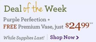 Deal of the Week Purple Perfection + Free Premium Vase, just $24.99**  Save Over 35%!  Shop Now