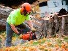 Prevent Chain Saw Kickback
