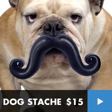 DOG STACHE
