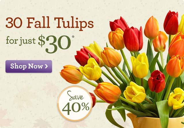 30 Fall Tulips for just $30* Save 40%!
