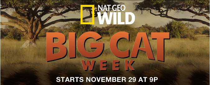 Get Catwalk Ready with Pur Minerals and Nat Geo WILD