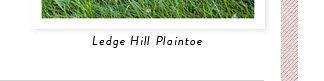 Ledge Hill Plaintoe