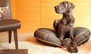 Pet Boutique: Fido's Favorites | Shop Now