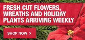 Fresh Cut Flowers, Wreaths and Holiday Plants Arriving Daily