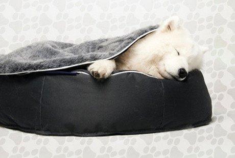 Ambient Pet Lounge