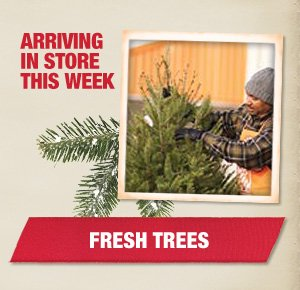Arriving In Store This Week Fresh Trees