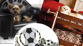 Great Gifts for Your Pet