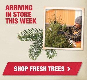 Arriving in store this week! Shop Fresh Trees