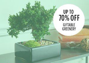 Up to 70% Off: Giftable Greenery