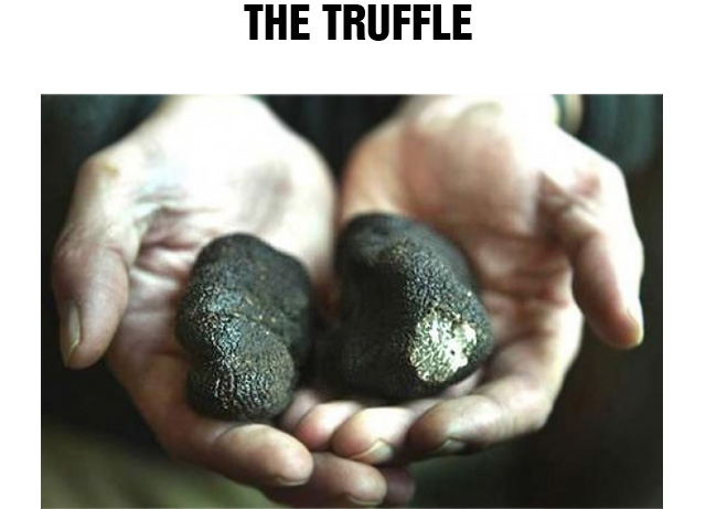 The Truffle