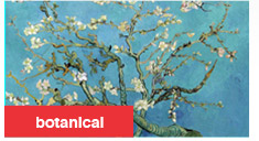 botanical -Almond Branches in Bloom San Remy c1890 By: Vincent Van Gogh