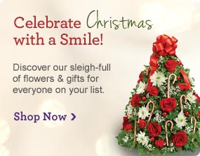 Celebrate Christmas with a Smile! Discover our sleigh-full of flowers & gifts for everone on your list. Shop Now