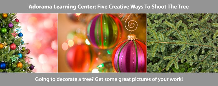 Five Creative Ways to Shoot the Tree