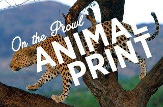 On The Prowl: Animal Print