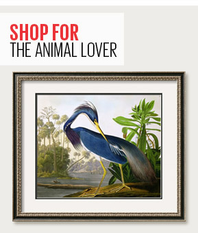 SHOP FOR THE ANIMAL LOVER - LOUISIANA HERON FROM 'BIRDS OF AMERICA' By: John James Audubon