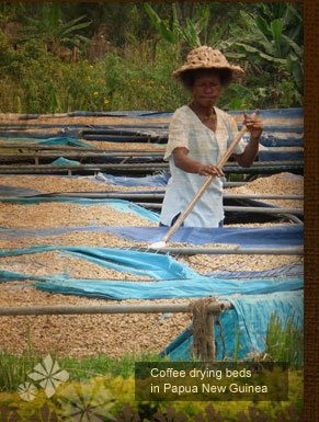 Coffee drying beds in Papua New Guinea