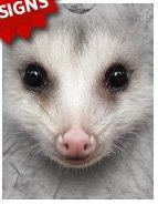 Big Face Opossum T-Shirt