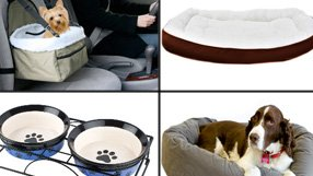 For Pampered Pets