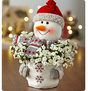 Frosty the Snowplant Shop Now