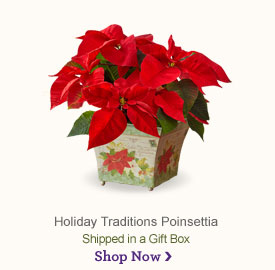 Holiday Traditions Poinsettia Shop Now