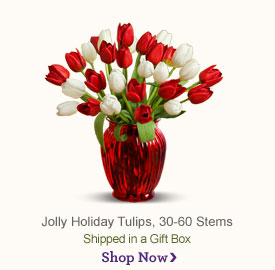 Jolly Holiday Tulips Shop Now