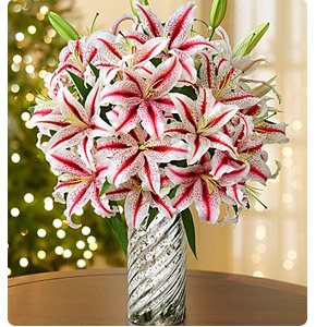Candy Cane Lilies Shop Now