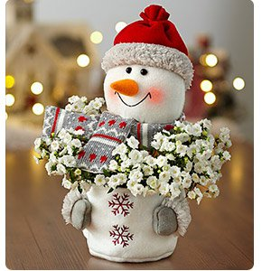 Frosty the Snow Plant Shop Now