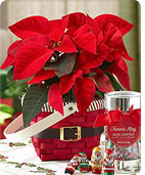Santa's Greeting Poinsettia  Shop Now