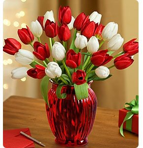 Holly Jolly Tulips Shop Now