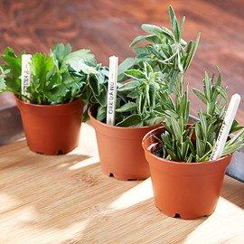 Green Thumb: Indoor Gardening