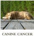 Csnine Cancer