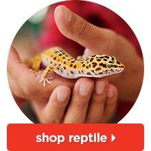 Shop reptile