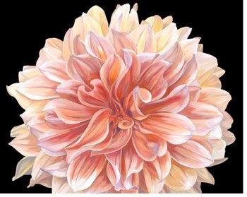 Orange Dahlia By: Linda Mcvay
