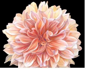 Orange Dahlia By: Linda Mcvay
