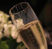 Champagne-Glass_NLsm