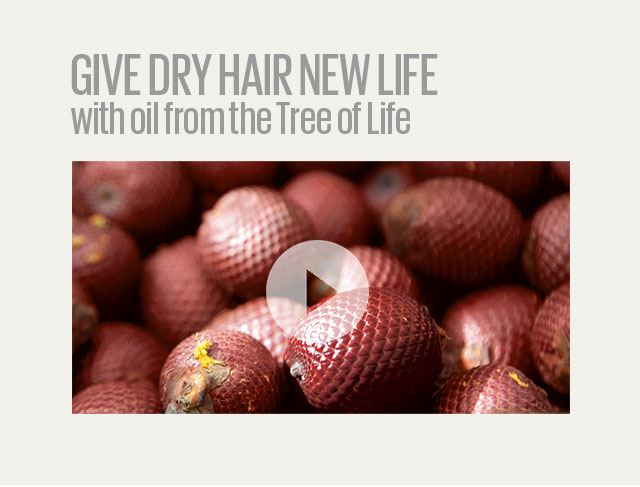 give dry hair new life with oil from the tree of life.