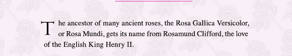 The ancestor of many ancient roses, the Rosa Gallica Versicolor, or Rosa Mundi, gets its name from Rosamund Clifford, the love of the English King Henry II.