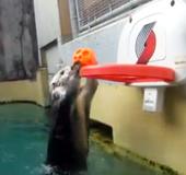 Otter-Basketball_NLsm