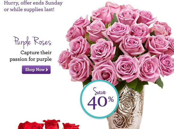 Purple Roses Capture their passion for purple Shop Now