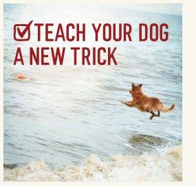 TEACH YOUR DOG A NEW TRICK
