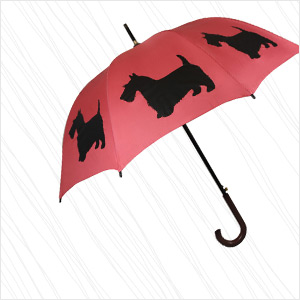 THE SAN FRANCISCO UMBRELLA COMPANY