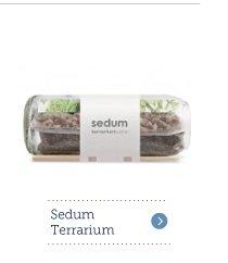 Sedum Terrarium